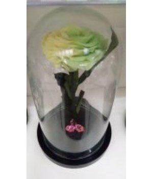 Роза в колбе желто-зеленая