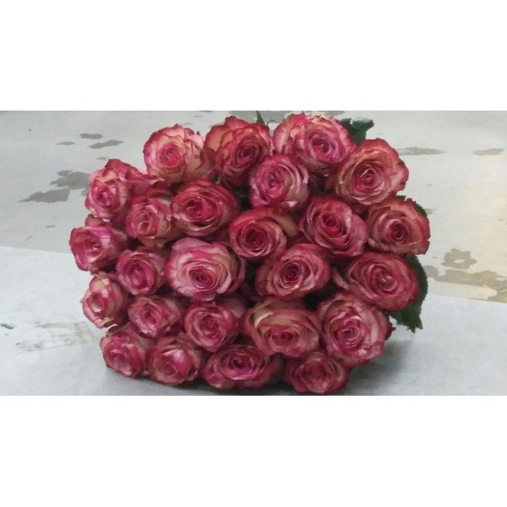 Букет 25 роз Эквадор