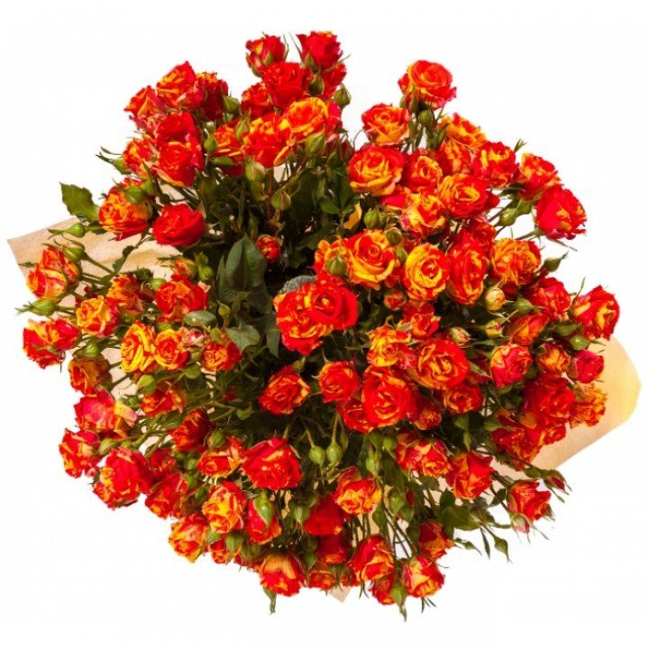 Кустовые розы Файр Флеш