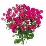 Кустовые розы Лидия