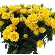 Кустовые розы Yellow Baby