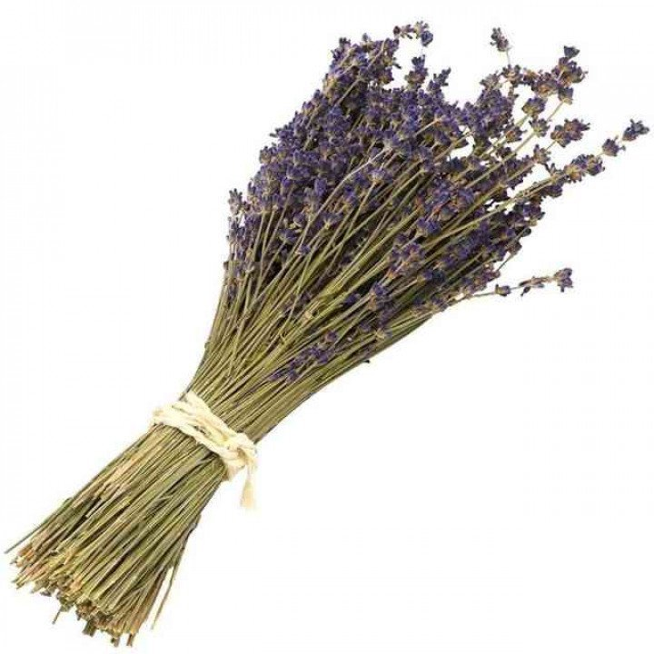 Лаванда (сухоцвет)