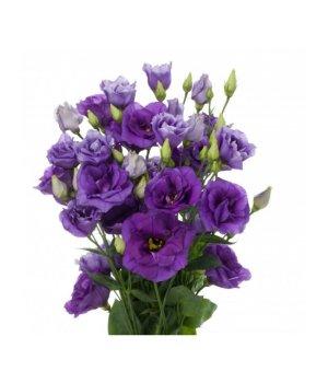 Лизиантус (эустома) фиолетовый