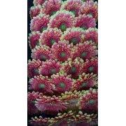 Герберы мини пестрые розовые с зеленой серединкой