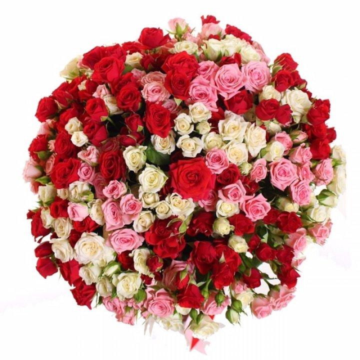 Розы Кения кустовые микс