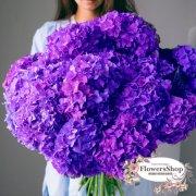Букет из 15 фиолетовых гортензий
