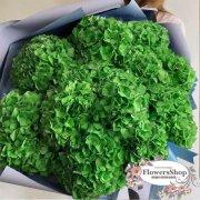 Букет из 15 зеленых гортензий