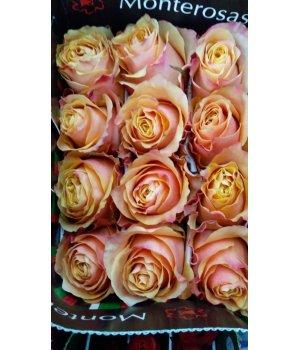 Роза Эквадор 6